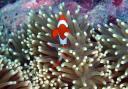 anemonedemeretpoissonclown.jpg