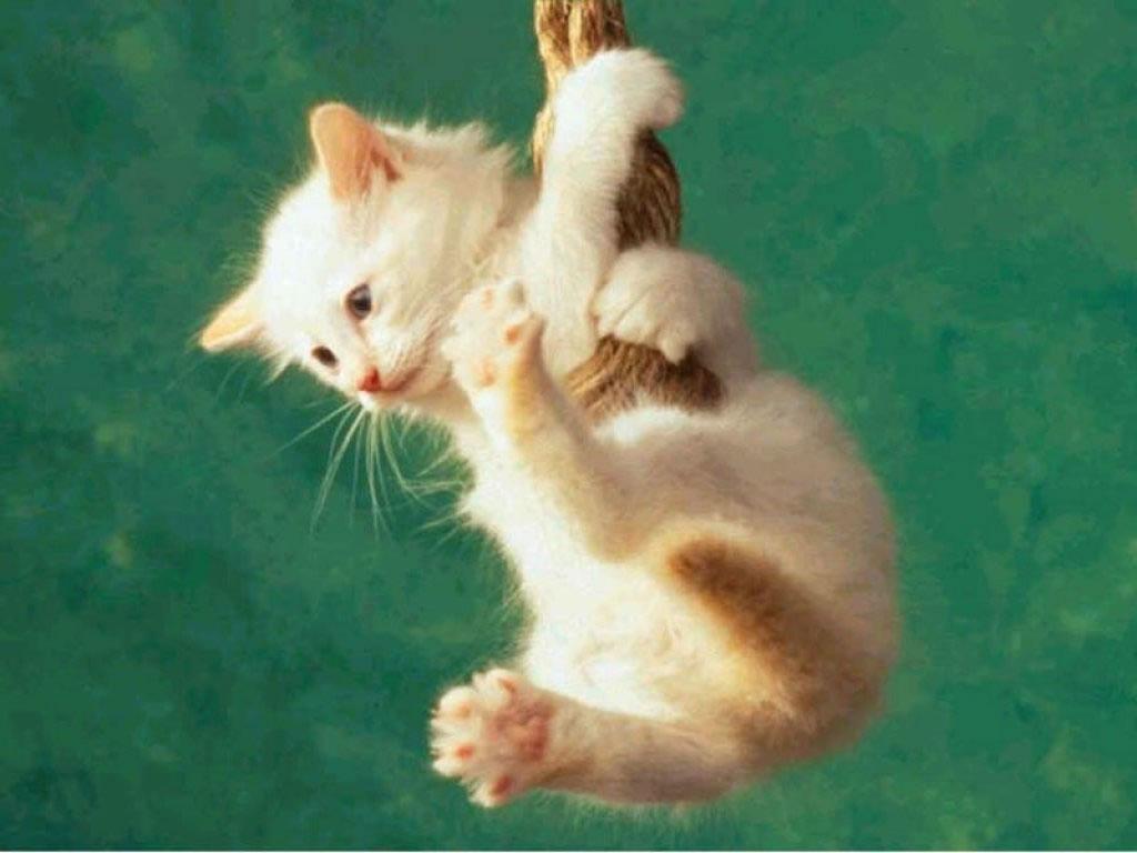 Les r ves travers les contes les chatons tout doux for Lorie par la fenetre je regarde seul